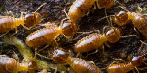 5 Things To Look For When Choosing A Pest Control Company Advanced Termite 4 Nearsay