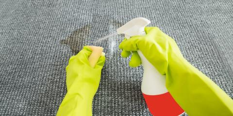 What You Should Know About Reoccurring Carpet Stains, Koolaupoko, Hawaii