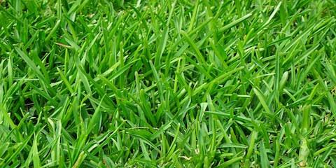 Should You Aerate Your Lawn? Denver's Yard Care Experts Advise, Denver, North Carolina