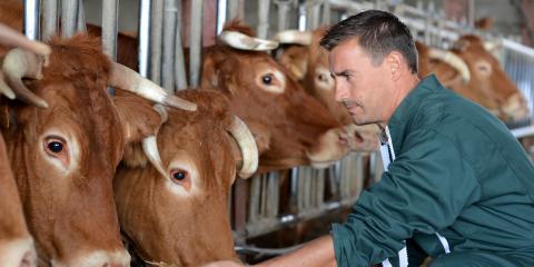 A Guide to Livestock Insurance, Dumas, Texas