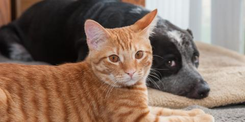 Why You Should Leave the AC on for Your Pets, Cincinnati, Ohio
