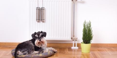 3 HVAC Service Tips for Homes With Pets, Canton, Georgia