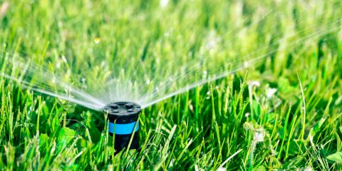 How Overwatering Affects Your Garden & Lawn, Scottsville, New York