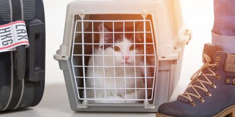 3 Ways to Prepare Your Pet for Boarding, Perry, Georgia