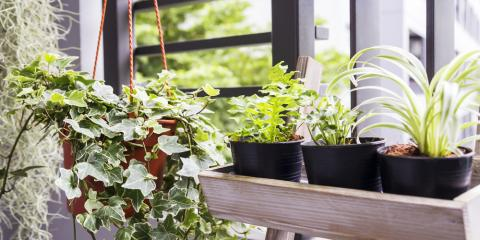 5 Plants for Everyone Who Wants Better Results on Air Quality Inspections, Anchorage, Alaska