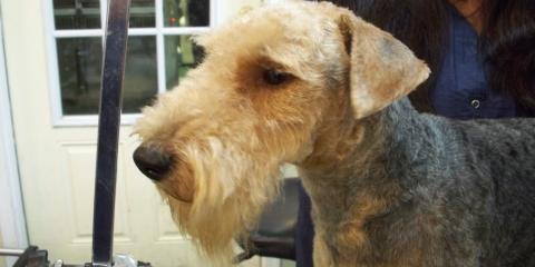 Dog Grooming Heath And Reach
