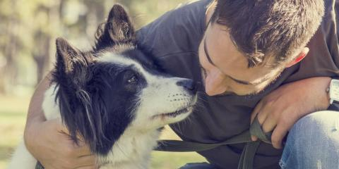 How to Keep Pets Safe When Earthquakes Hit Alaska, Anchorage, Alaska