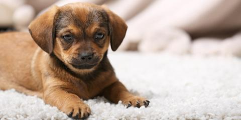 5 Carpet Cleaning Tips for Pet Owners, Anchorage, Alaska