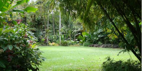 Keep Your Lawn Looking Its Best With 3 Lawn Care Tips From Hawaii's Premier Agricultural Nursery, Koolaupoko, Hawaii