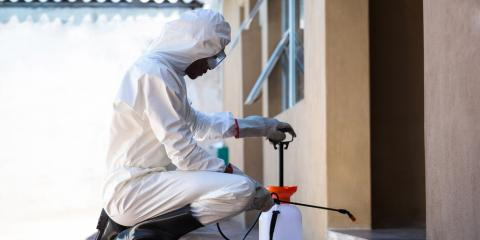 What to Expect During an Appointment for Termite Control, Pahoa-Kalapana, Hawaii