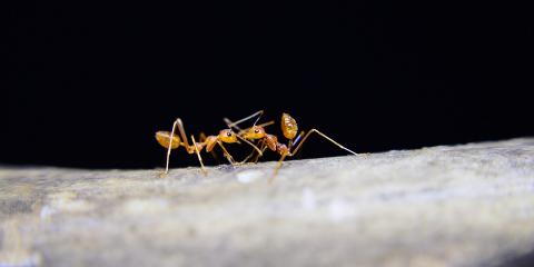3 Causes of Ant Infestations From Hawaii's Ant Control Experts, Pahoa-Kalapana, Hawaii
