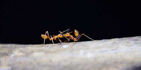 Ant Infestation In Kitchen Walls
