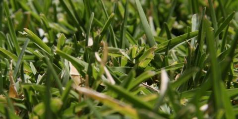 Healthy Flowers & Foliage: The Benefits of Fertilizing Your Lawn, Koolaupoko, Hawaii