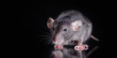 Rat Control Service Shares 3 Signs of Mice, Dothan, Alabama