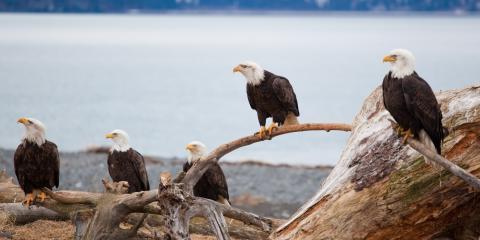 Environmental Laboratory Expert Explains Recognizing & Reporting Environmental Hazards, Point MacKenzie, Alaska