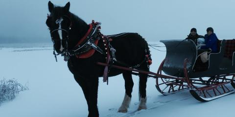 3 Reasons Sleigh Rides Are the Perfect Holiday Adventure, Palmer, Alaska