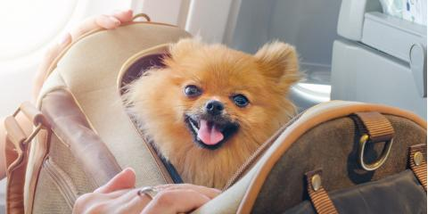 How to Keep Your Pet Safe & Comfortable On Airplanes, Newport-Fort Thomas, Kentucky