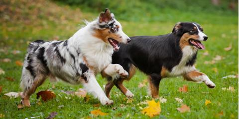 4 Ways to Help Your Dog Get Along with Other Dogs, Nicholasville, Kentucky