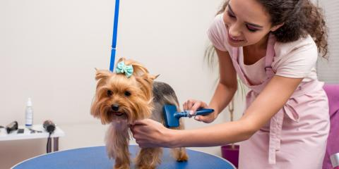Ways to Ease Your Dog's Anxiety About Pet Grooming, Nicholasville, Kentucky