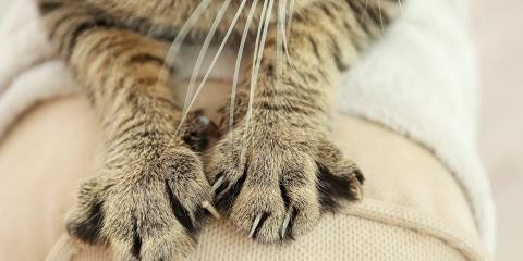 3 Tricks to Keep Cats from Scratching Furniture, Lincoln, Nebraska