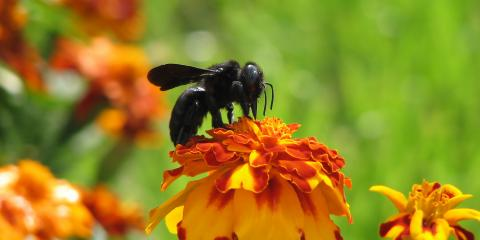 How to Prevent & Control Carpenter Bees, Lebanon, Kentucky