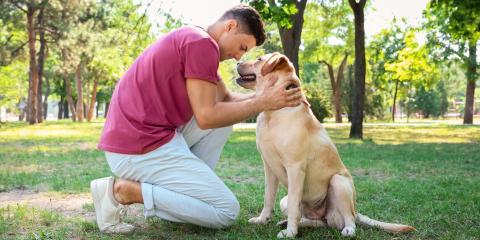 3 Summer Pet Grooming Tips for Your Dog, 4, Tennessee