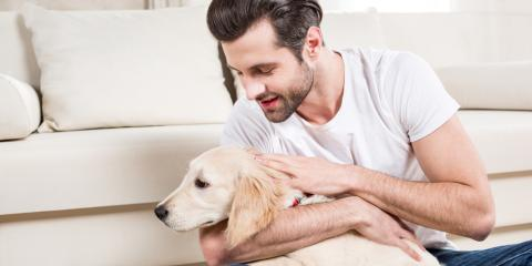 Pet Care: How to Ease Your Pup's Separation Anxiety, Covington, Kentucky