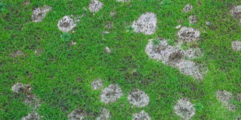 Aloha 'Aina Landscaping Explains 3 Reasons for Brown Grass Spots, Ewa, Hawaii
