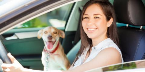 A Moving Company's Top Tips on Pet Relocation, Ewa, Hawaii