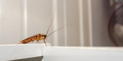 4 Types of Roaches Your Exterminator Wants You to Know, Wahiawa, Hawaii