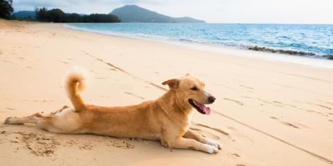 Why Having Pet Sitting Over Your Vacation is the Best Solution, Hilo, Hawaii
