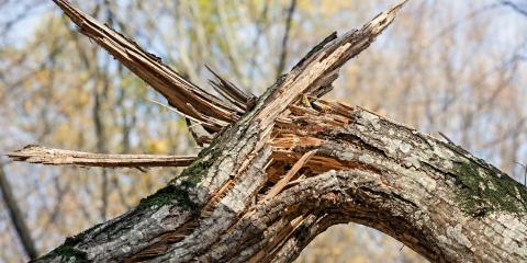 3 Signs You Need Emergency Tree Service, Rochester, New York