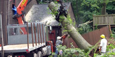 Does My Insurance Cover Emergency Tree Service?, West Hartford, Connecticut