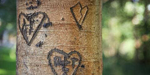 What Tree Service Experts Have to Say About Carving, West Hartford, Connecticut