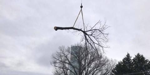 Do You Need Emergency Tree Service? Look for These Warning Signs, High Point, North Carolina