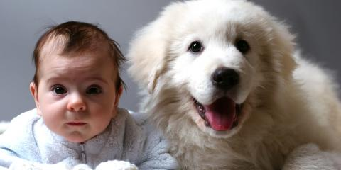 How Can You Prepare Your Dog for a New Baby?, Batavia, Ohio