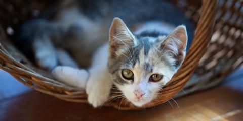 Veterinarian's 5 Helpful Tips for New Cat Owners, Batavia, Ohio