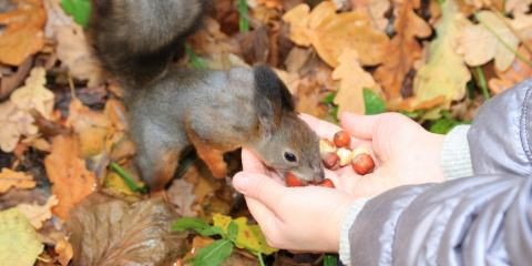Love Squirrels? 3 Reasons Why You Should Avoid Feeding Them, New Milford, Connecticut