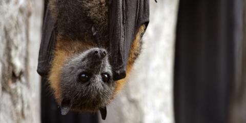 Animal Control Experts Share 3 Reasons Why Bats Hang Upside Down, New Milford, Connecticut