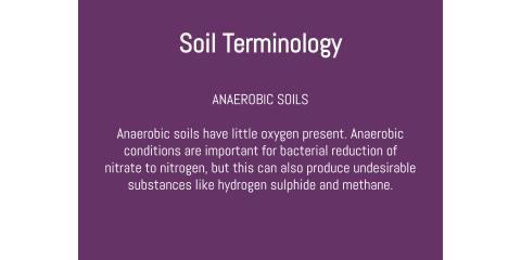 Soil Terminology: Anaerobic Soils, Brandon, Florida