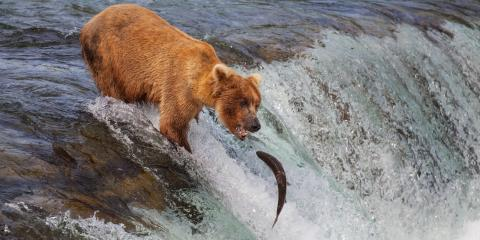 5 Amazing Facts About Alaskan Salmon, Anchorage, Alaska