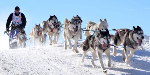 Bundle Up for the 2020 Fur Rendezvous & Iditarod Sled Dog Race, Anchorage, Alaska