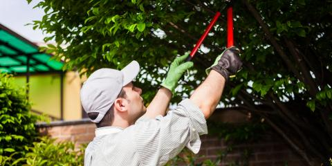 The Differences Between Tree Pruning & Trimming, Anchorage, Alaska