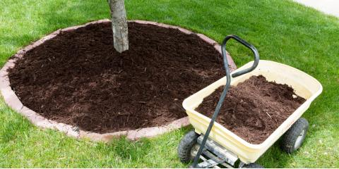 A Brief Guide to Mulching Trees, ,