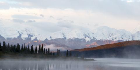 Top 4 Alaskan Tree Services & Tips for Fall, Anchorage, Alaska