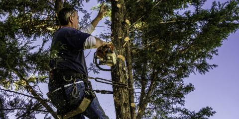 Why You Should Have a Professional Do Your Tree Trimming, Anchorage, Alaska