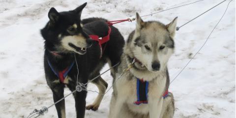 3 Fun Activities to Enjoy in Alaska During Winter, Anchorage, Alaska