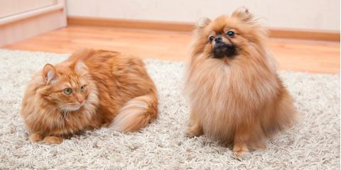 3 Carpet Cleaning Tips for Pet Owners, Anchorage, Alaska