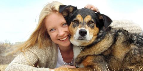 Alaska Divorce Law Now Treats Family Dogs Like Children, Fairbanks, Alaska