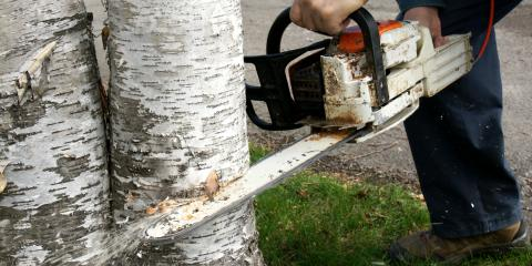 Top 3 Reasons to Remove Dead Trees, Anchorage, Alaska